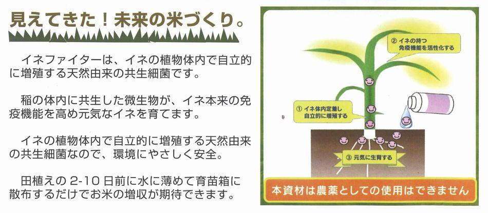 「イネファイター」は、イネの植物体内で自立的に増殖する天然由来の共生細菌です。稲の体内に共生した微生物が、イネ本来の免疫機能を高め元気なイネを育てます。イネの植物体内で自立的に増殖する天然由来の共生細菌なので、環境にやさしく安全。田植えの2-10日前に水に薄めて育苗箱に散布するだけでお米の増収が期待できます。
